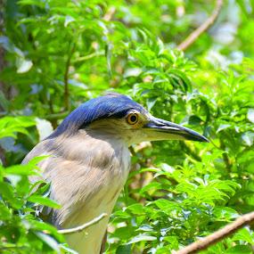by Mochi Tab - Animals Birds