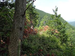 稜線は伐採木とヤブ