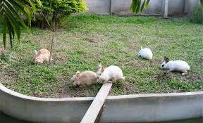 ผลการค้นหารูปภาพสำหรับ กระต่ายการเลี้ยงนอกบ้าน