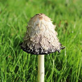 by Tracy Taylor - Nature Up Close Mushrooms & Fungi