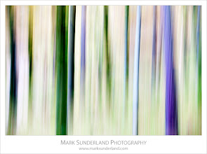 Photo: Pine Trees in Autumn  Here's an abstract one from my recent trip to the Lake District. These pine trunks in woodland near Grange in Borrowdale made an ideal subject for intentional camera movement.  Canon EOS 5D MkII,EF70-200mm f/4L USM at 140mm, ISO 200, 1/13s at f8