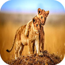 Animals Wallpapers And HD Backgrounds Download on Windows