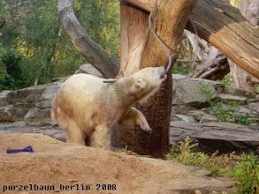 Photo: Der Schlauch am Baum ist auch interessant ;-)