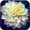 Garden Flower Live Wallpaper icon