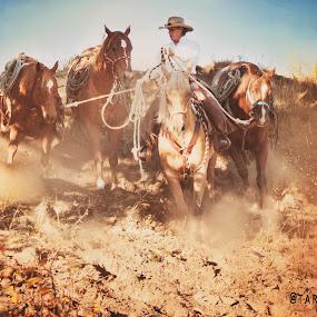 Golden Remuda by Tara McKenzie - Animals Horses