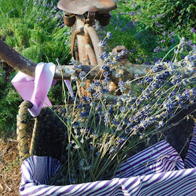 Past and Present by Diana Reed Kubec - Uncategorized All Uncategorized ( purple, still life, summer, flowers, lavender, bicycle,  )