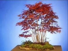 日本の盆栽のデザインのアイデアのおすすめ画像3