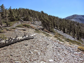Photo: 12:41 - Arriving at the Pine/Dawson saddle (9151') and ready to climb 424 vertical feet to Dawson Peak