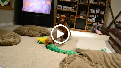 Video: Playtime with new bird day toys