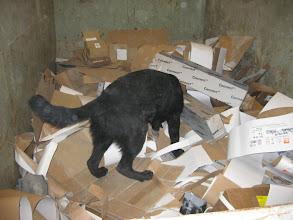 Photo: Vilma 5 mnd søker etter nissen i en kontainer med papp