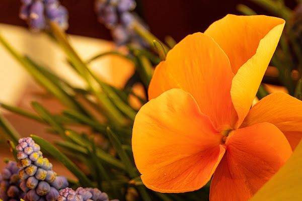 Simply orange di FilippoColombo