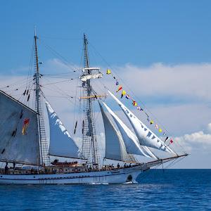 Talls ships arrive 241.jpg