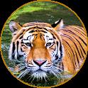 Best Tiger Wallpaper HD icon