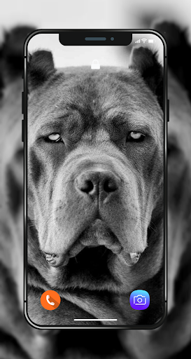 Download Pitbull Wallpapers Hd 4k Pitbull Dog Photos Free For Android Pitbull Wallpapers Hd 4k Pitbull Dog Photos Apk Download Steprimo Com