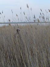 Photo: Looking for birds in the reeds