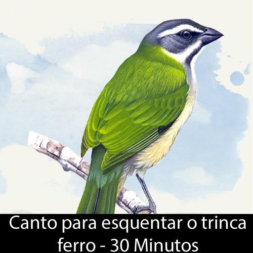 DE TRINCA BAIXAR MP3 CANTO GRATIS FERRO