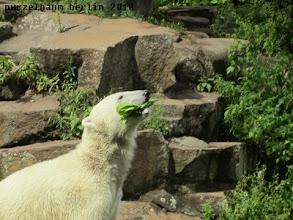 Photo: Salat - nun doch wieder ;-)