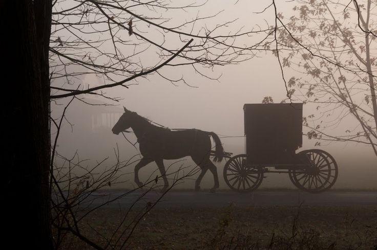 عکاسی ضد نور در مه