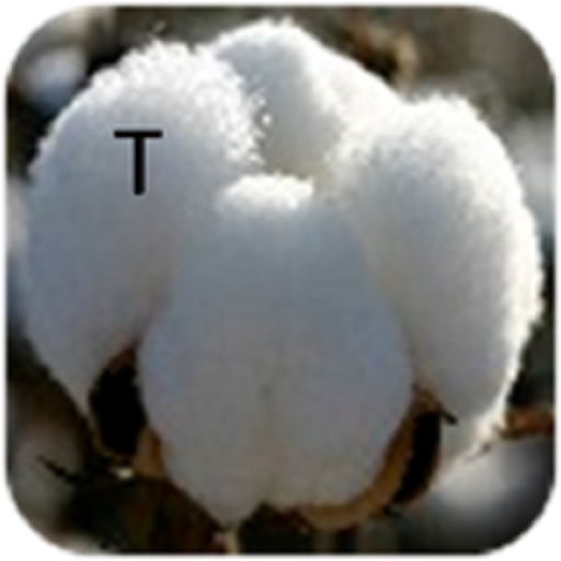 Cotton Telugu