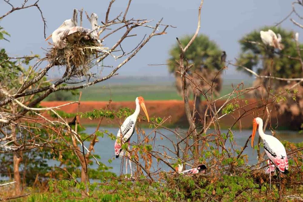 top-monsoon-getaways-delhi-Sultanpur_Bird_Sanctuary