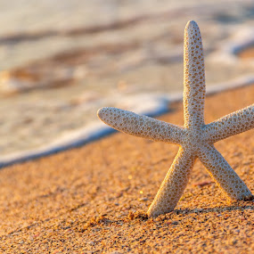 summer beach with starfish by Grigor  Ivanov - Landscapes Beaches ( the scenery, concept, old, relax, tropical, retro, ocean, travel, beach, yellow, landscape, sun, coast, island, sky, nature, sunny, sunshine, surf, water, sand, desert, vintage, dream, starfish, wallpaper, white, star, sea, horizon, sunlight, paradise, field, vacation, outdoor, peace, background, summer, scene, beam, day, natural, tour tourism )