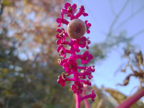 Photo: A Walk on November 6, 2011: Berry