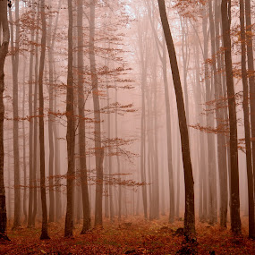 lost by Rux Georgescu - Landscapes Forests ( forests, trees, forest, morning, woods, misty, mist )