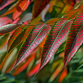 Autumn leaves by Edit Peterffy - Nature Up Close Leaves & Grasses ( red, nature, autumn, green, leaves, fall, abscission, folliage,  )