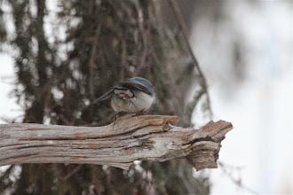 Photo: Kuva-17a, pähkinänakkeli fl (marraskuu) kuvaaja Timo Talala