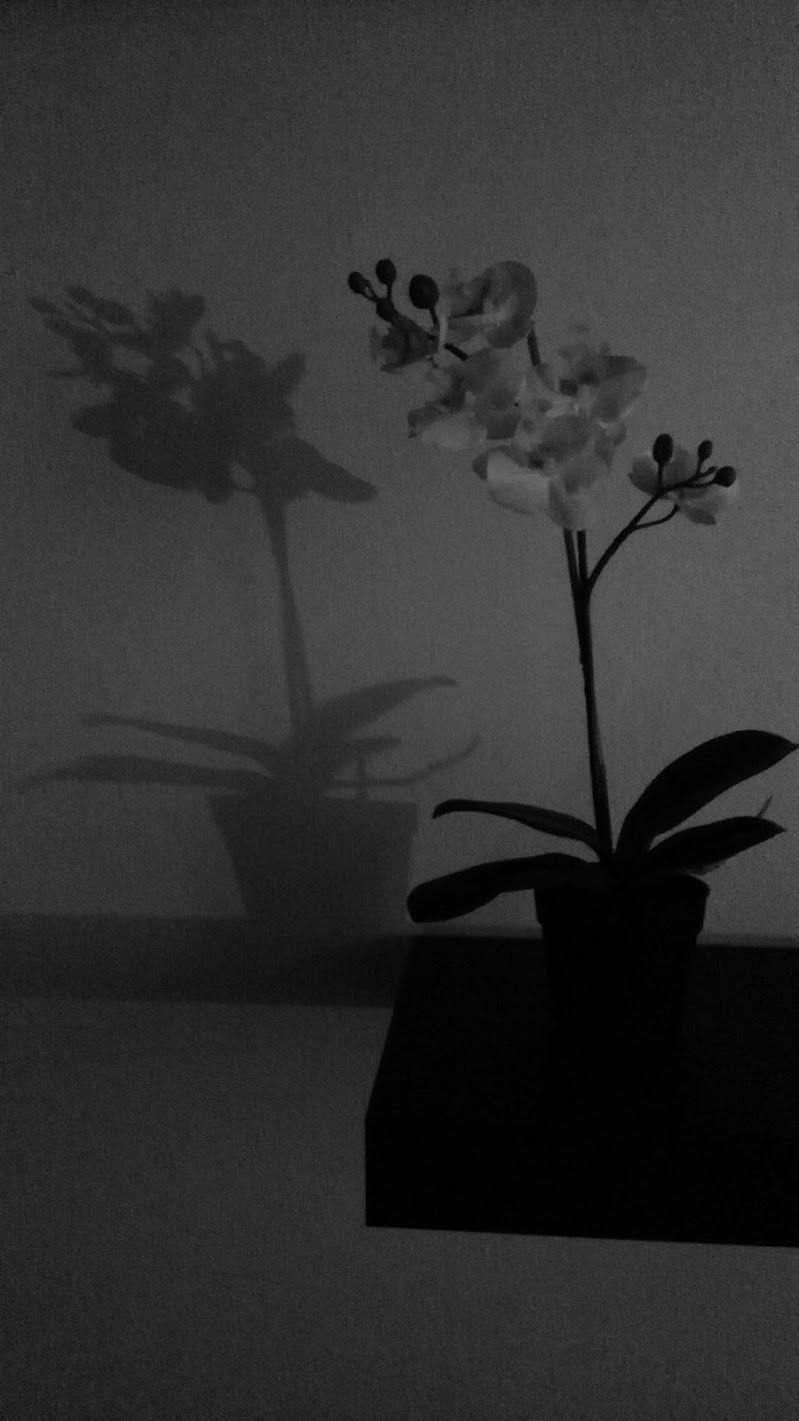 L'Orchidea e la sua ombra di Pans_5