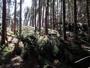倒木が先を塞ぐ