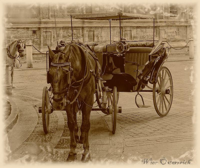Carrozzella con cavallo di Mary.S
