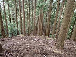 緑林の中の道