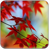 Autumn Wallpapers Sakti