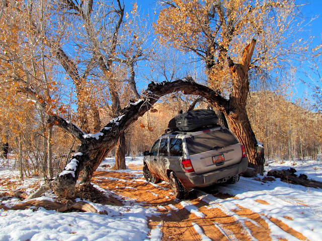 Jeep under a large cottonwood branch