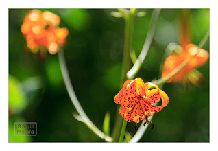 Photo: Eastern Sierras-20120716-433