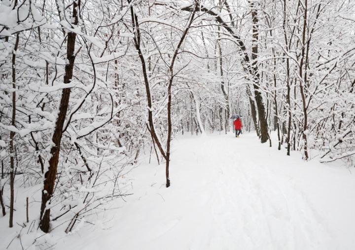 Le cronache di Narnia di Jorjo