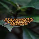 Obeidia tigrata 虎紋長翅尺蛾