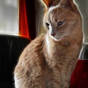 by Branka Radmanić - Digital Art Animals