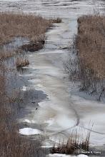 Photo: Beaver lodge channel