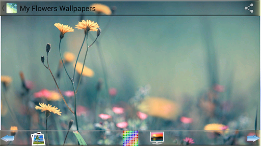 My Flowers Wallpapers