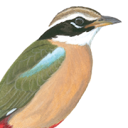 App Icon for Birds of India App in Czech Republic Google Play Store