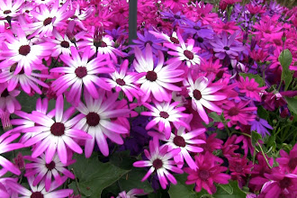 Photo: Flowers at the Butchart Gardens http://ow.ly/caYpY