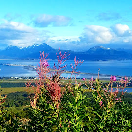 Beautiful overlook of the Homer Spit on a sunny day by LaDonna McCray - Landscapes Waterscapes ( sunny, spit, day, homer )