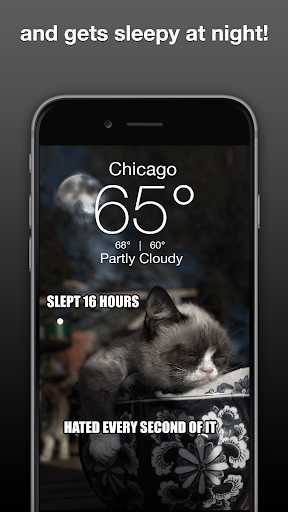Grumpy Cat Weather 4.9.8 Apk for Android 3