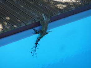 Photo: Aprés un bon bain dans la piscine