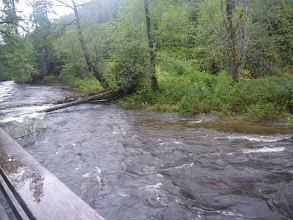 Photo: Our view across the river.  It is very swollen from all the rain, which makes it hard for the bears to fish.  This made us wonder if we were going to see anything.