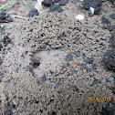 Ants excavating (video)