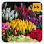 Tulips Wallpaper HD New Tab Theme©