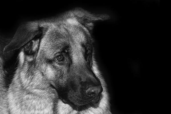 Il mio cane di Guarlotti Eleonora